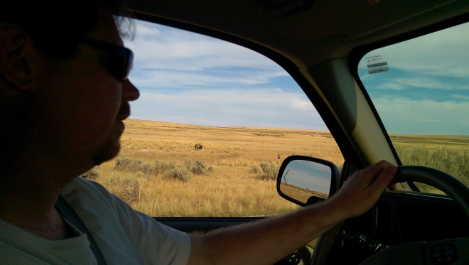 A buffalo and a man trying to tease him out our window.